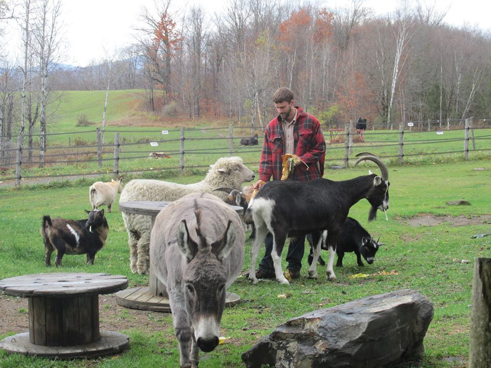 Farm Sanctuary Animals