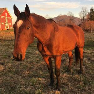 JONI - A Gelding Horse