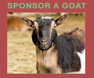 Sponsor A Goat