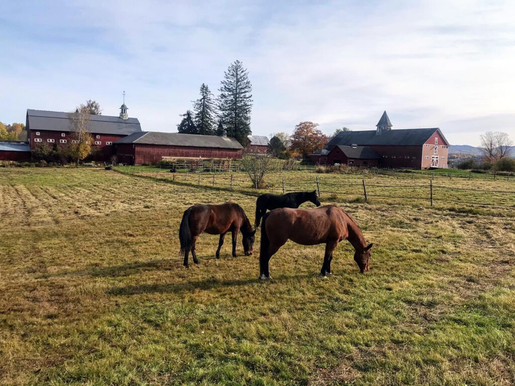 Rescued Horses in a field at Mountain View Farm Animal Sanctuary