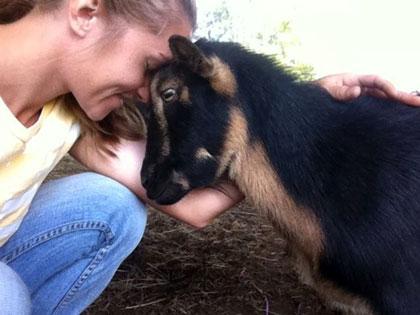Mountain View Farm Animal Sanctuary